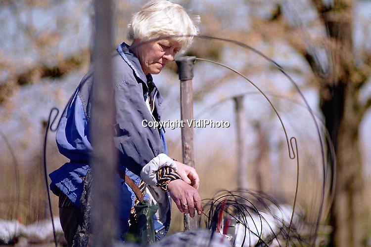 Foto: VidiPhoto..HERVELD - Aardbeienteelster mevrouw Veens uit Herveld is gestart met de voorbereidingen voor het nieuwe aardbeienseizoen. Ze plaatst alvast de .druppelaars in de aarbeienbedden-op-zithoogte. Daarmee wordt straks de watertoevoer geregeld. De planten worden eind deze maand geplaatst. De .-biologische- aardbeien worden straks zittend geplukt door een handjevol 65-plussers.