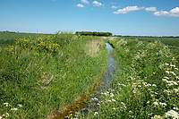 Farm drain - Lincolnshire, May