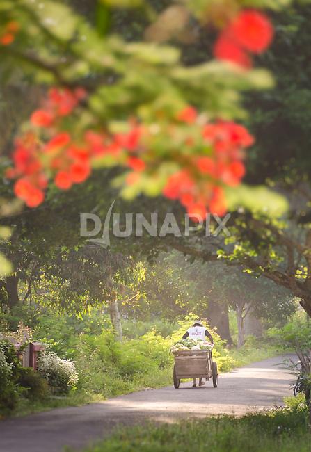 A lone vegetable seller pulls his cart along a sleepy lane in Banda Neira.