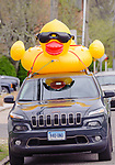 Beacon Falls, CT. 06 May 2018-050618BS232 - It's Rubber Ducks everywhere, even on cars during the the Duck Race and Riverfest at Volunteer Park along the Naugatuck River on Sunday afternoon. Bill Shettle Republican-American