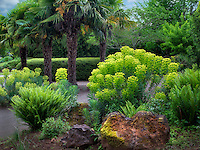 Mediterranean Spurge and palm trees. Oregon Garden, Oregon