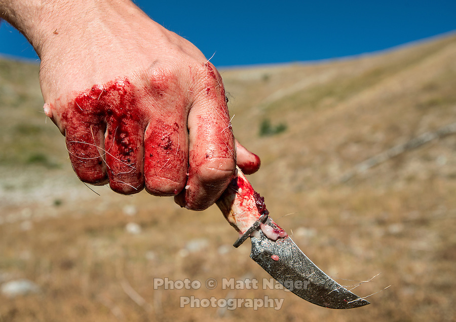 Hunter Mike Stock after gutting a shot deer on Greyback Ridge in the Hoeback Drainage of Wyoming Region H, outside of Alpine, Wyoming, September 23, 2015.<br /> <br /> Photo by Matt Nager