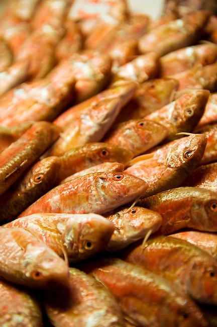 Fresh Red Mullet Venice Rialto Fish Market