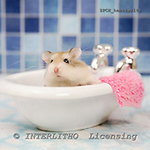 Xavier, ANIMALS, photos+++++,SPCHHAMSTER143,#a# ,funny