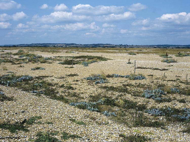 Shingle, Rye Harbour, East Sussex, UK