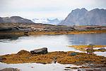 Kulusuk Shore Greenland