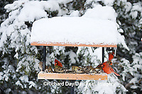 00585-03602 Northern Cardinals, House Finch  & American Goldfinches on tray feeder in winter, Marion Co. IL