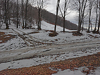 FOREST_LOCATION_90150