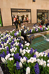 New York City, New York: Flowers in Rockefeller Center, tulips and hyacinths  .Photo #: ny285-14924  .Photo copyright Lee Foster, www.fostertravel.com, lee@fostertravel.com, 510-549-2202.