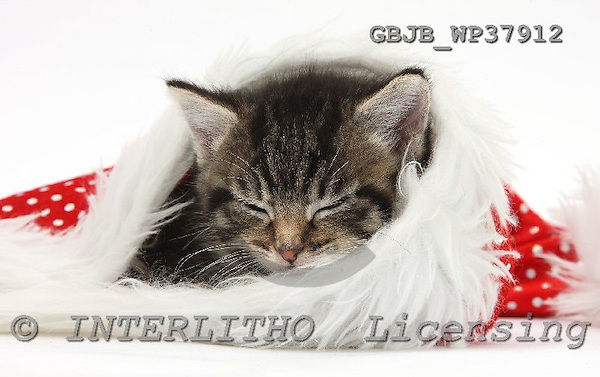 Kim, CHRISTMAS ANIMALS, photos, GBJBWP37912,#XA# stickers