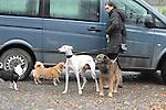Am fr&uuml;hen Morgen nach der Trauerfeier ging Teresa Enke unweit Ihres Anwesen mit den Hunden allein mit ihren Hunden spazieren. Am Ende des Weges galoppierte ihr braunes Pferd auf der Weide.<br />  <br /> Foto: &copy; nph ( nordphoto )  <br /> <br />  *** Local Caption *** Fotos sind ohne vorherigen schriftliche Zustimmung ausschliesslich f&uuml;r redaktionelle Publikationszwecke zu verwenden.<br /> Auf Anfrage in hoeherer Qualitaet/Aufloesung