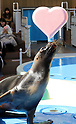 Valentine's Day attractions at Sunshine Aquarium