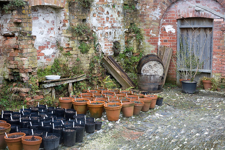 Nursery yard, Heligan, Cornwall, mid February.