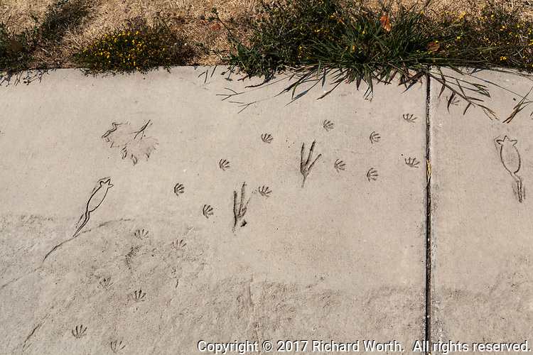 The concrete path to the fishing/observation pier at Big Break Regional Shoreline is decorated with impressions of animal and bird tracks, leaves and animal outlines.