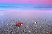 Star Fish and Sandy Beach, Atlantic Ocean and surf at sunset, Seabright Beach, New Jersey