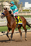 ARCADIA, CA  MARCH 7: #4 Authentic, ridden by Drayden Van Dyke, returns to the connections after winning the San Felipe Stakes (Grade ll) on March 7, 2020, at Santa Anita Park in Arcadia, CA. (Photo by Casey Phillips/Eclipse Sportswire/CSM