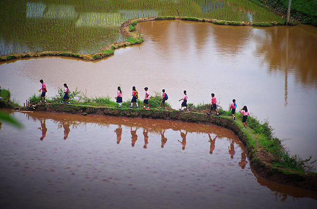 Schoolchildren walk home on path through rice fields, Tanatoraja. Sulawesi, Indonesia.