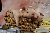 Interlitho, Alberto, ANIMALS, pigs, photos, 2 pigs, basket(KL15018/2,#A#) Schweine, cerdos