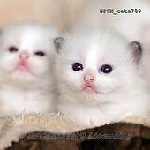 Xavier, ANIMALS, REALISTISCHE TIERE, ANIMALES REALISTICOS, cats, photos+++++,SPCHCATS789,#a#