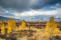Grand Teton Storm, golden aspen, Willow Flats, Autumn<br />