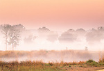 Morning landscape, Kanha National Park, India