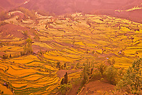 Yuan Yang rice terraces.Peoples Republic of China.Yunnan Province.Near Vietnamese border.UNESCO Wold Heritage Site