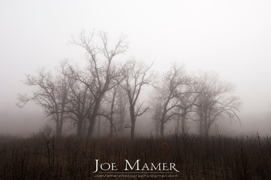 Fog shrouded oak trees at Louisville Swamp, part of the Minnesota River Valley National Wildlife Refuge. The Minnesota Valley National Wildlife Refuge is located within the urban and suburban areas of Minneapolis and St. Paul. It is a green belt of large marsh areas totaling approximately 14,000 acres, spanning 99 miles of the Minnesota River. This is one of only four American national wildlife refuges in an urban area, and the largest.