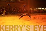 Manners Black (No 6), winner of the www.igb.ie525 at Kingdom Greyhound Stadium, Tralee, on Friday night..