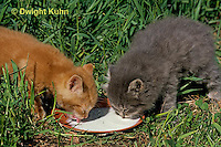 SH32-002z  Cat - kittens drinking at 4 weeks