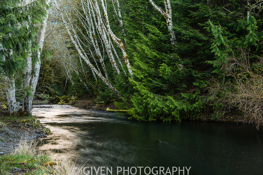 Barnes Creek, Olympic National Park, Washington