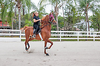 South Florida horse photos by Debi Pittman Wilkey.