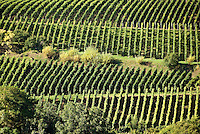 Germany, Baden-Wuerttemberg, Markgraefler Land, vineyards near wine village Auggen