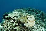 Bleaching corals.