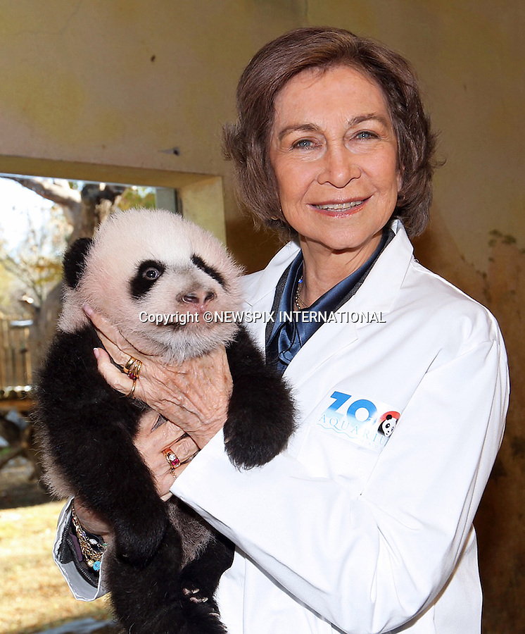 QUEEN SOFIA <br /> cuddles a 3-month old panda when she visited Zoo Aquarium de Madrid_28/11/2013<br /> Mandatory Credit Photos: Casa SM el Rey-Borja/NEWSPIX INTERNATIONAL<br /> <br /> **ALL FEES PAYABLE TO: &quot;NEWSPIX INTERNATIONAL&quot;**<br /> <br /> PHOTO CREDIT MANDATORY!!: NEWSPIX INTERNATIONAL(Failure to credit will incur a surcharge of 100% of reproduction fees)<br /> <br /> IMMEDIATE CONFIRMATION OF USAGE REQUIRED:<br /> Newspix International, 31 Chinnery Hill, Bishop's Stortford, ENGLAND CM23 3PS<br /> Tel:+441279 324672  ; Fax: +441279656877<br /> Mobile:  0777568 1153<br /> e-mail: info@newspixinternational.co.uk