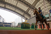 SHA TIN,HONG KONG-MAY 06: Stormy Antarctic,trained by Ed Walker, is schooling at the parade ring in preparation for the Champions Mile at Sha Tin Racecourse on May 6,2017 in Sha Tin,New Territories,Hong Kong (Photo by Kaz Ishida/Eclipse Sportswire/Getty Images)