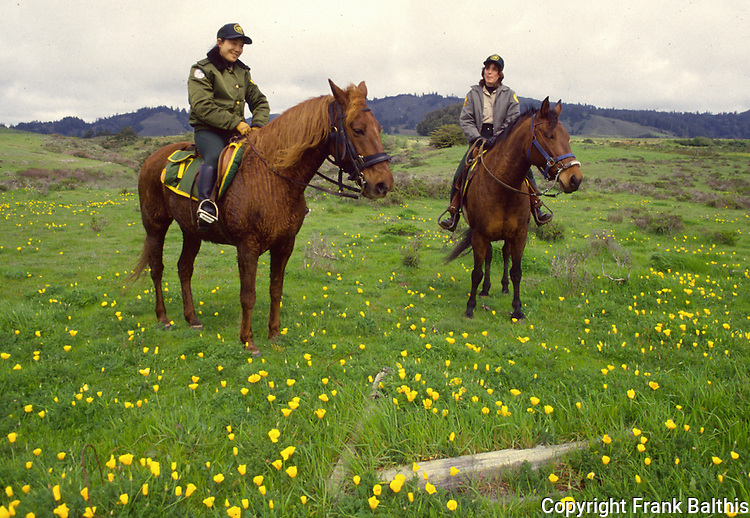horse patrol at Ano Nuevo State Park