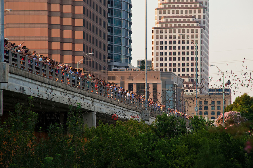 Each night hundreds of onlookers watch the bats fly out of the Congress Avenue Bat Bridge on Lady Bird Lake in downtown Austin, Texas.