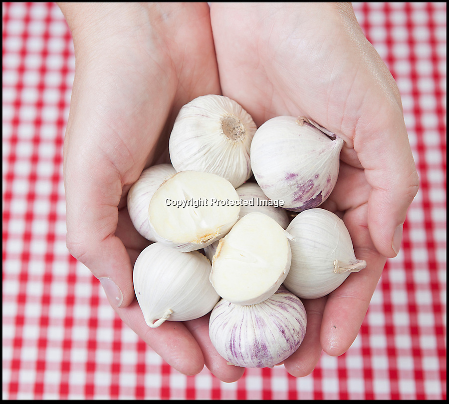 BNPS.co.uk (01202 558833)<br /> Pic: LauraJones/BNPS<br /> <br /> Genius farmers have put an end to the fiddly and frustrating task of peeling pungent garlic - by inventing a revolutionary bulb made entirely of one clove.<br /> <br /> The unique single clove garlic looks like a normal bulb but rather than being made up of many small cloves it comprises just one, more like an onion.<br /> <br /> It only has to be peeled once, not only saving cooks from the laborious process of removing its paper-like outer skin but also from getting smelly fingers.<br /> <br /> It can then be chopped and then the rest can be stored in the fridge.<br /> <br /> The clever product has recently hit the shelves of British supermarket Lidl, the UK's only single clove garlic supplier.<br /> <br /> A 250g basket containing around eight single cloves costs £1.49.