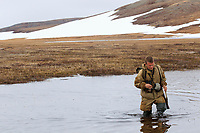Russian field biologist Egor Loktionov crossing a tundra pond while searching for arriving Spoon-billed Sandpipers in spring. Each day was spent hiking a series of Moraine hills and coastal spits where about a dozen Spoon-billed Sandpipers had nested the previous season (there used to be 70 pairs at this location). We were looking for displaying birds as they arrived, and later, nests. The birds are sparsely distributed over a large area and are very secretive once they are paired and have a nest. Chukotka, Russia. May.