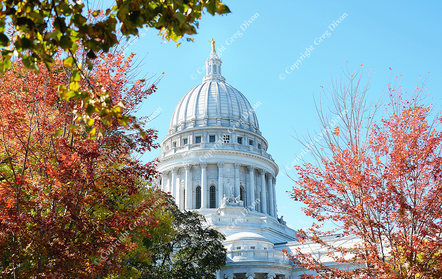 Capitol in Color  Madison, Wisconsin  State Capitol | The Wisconsin State Capitol Building stands behind trees in fall color on the morning of Saturday, October 17, 2015 | Signature Edition Print by Greg Dixon | Digital Photograph with Oil Painting Effect