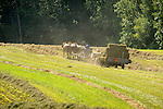 Amish mule team bailing hay in June. Nippenose Valley.