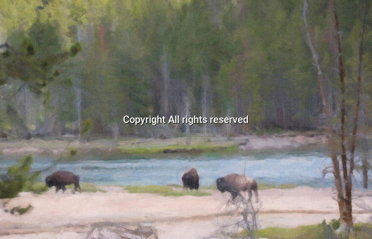 Bison stand near a river in Yellowstone. A painterly effect has been added to this picture.