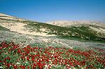 The Judean Desert. Wadi Qelt at springtime