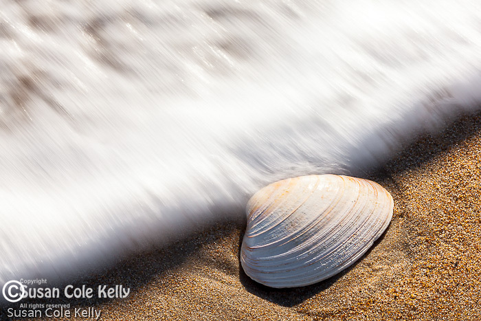 A wave and a clam shell at Parker River National Wildlife Refuge, Newburyport, Massachusetts, USA