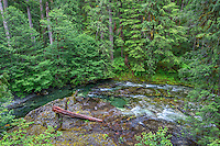 ORCAN_D130 - USA, Oregon, Willamette National Forest, Opal Creek Scenic Recreation Area, Little North Santiam River with surrounding lush coniferous forest in spring.