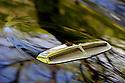14/05/12 - MESSEIX - PUY DE DOME - FRANCE - Essais STUDEBAKER Flight Hawk modele 1956 - Photo Jerome CHABANNE