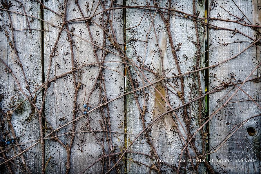 1.15.17 - Fence Art....