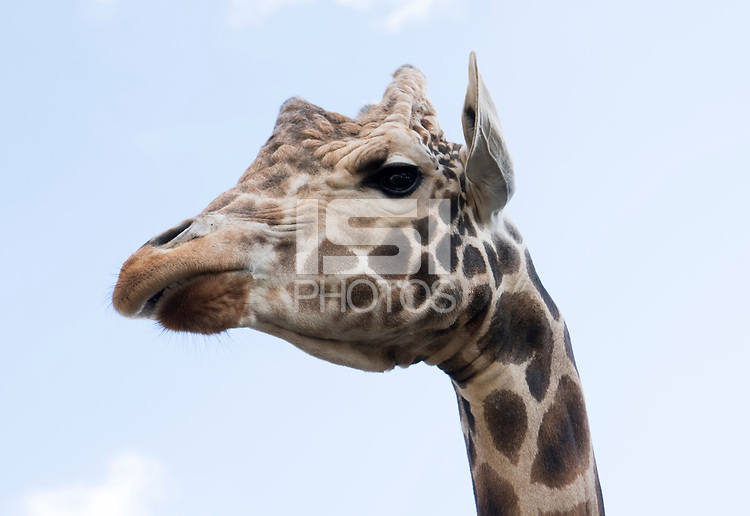 Tampa, FL - February 24, 2019:  Members of the USWNT visited ZooTampa at Lowry Park.