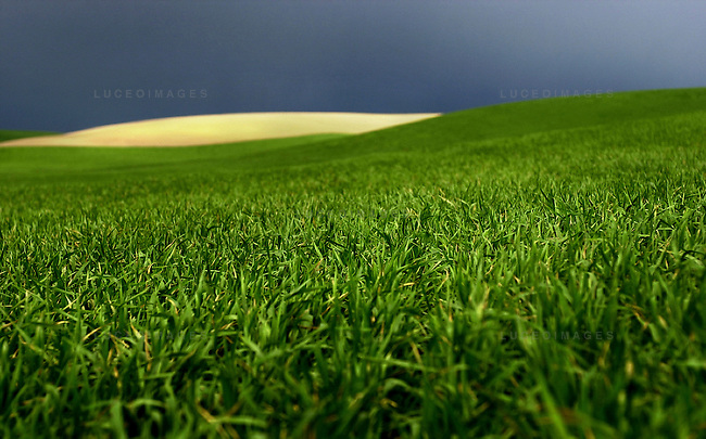 New grass sets in while rolling hills offset dark storm clouds moving through the Palouse near Pullman, Washington.