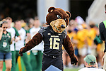 The Baylor Bears mascot in action during the game between the Oklahoma State Cowboys and the Baylor Bears at the McLane Stadium in Waco, Texas.